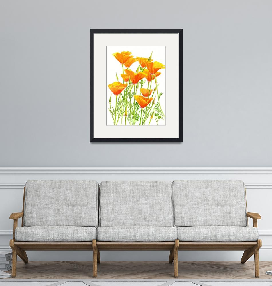"""California Poppies, white background""  (2011) by Pacific-NW-Watercolors"