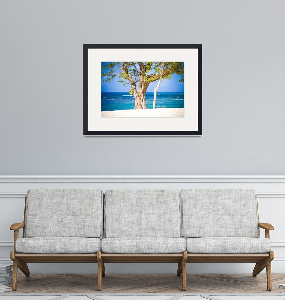 """""""Beach Tree""""  (2008) by indiannomad"""
