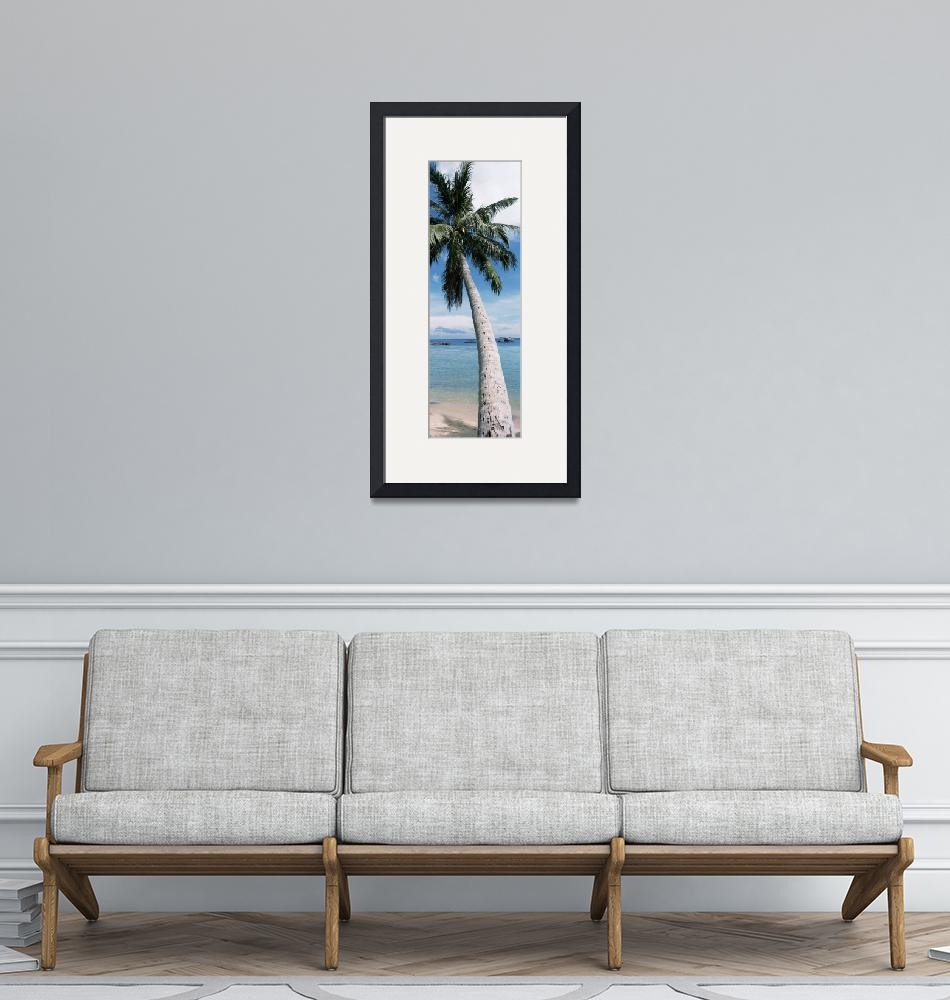 """""""Close-up of a palm tree on the beach""""  by Panoramic_Images"""