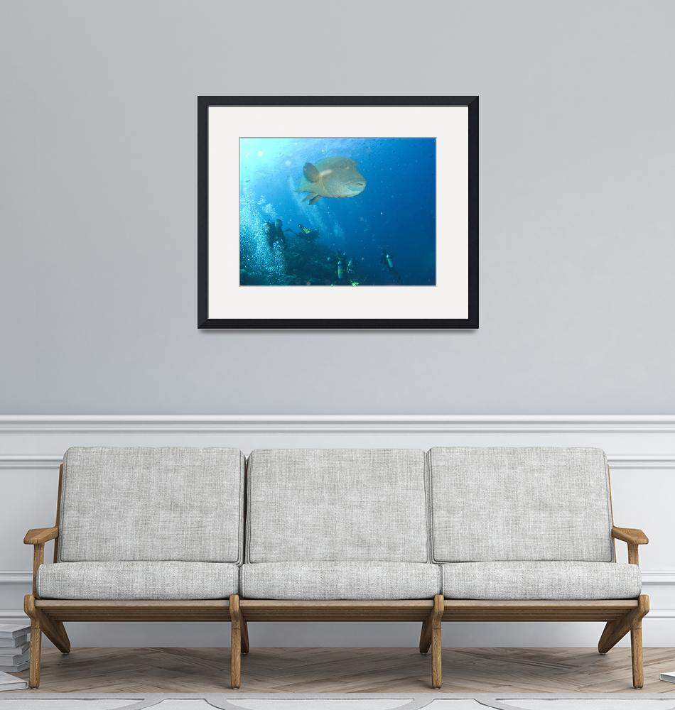 """""""Humphead Wrasse""""  (2008) by KazooDiver"""