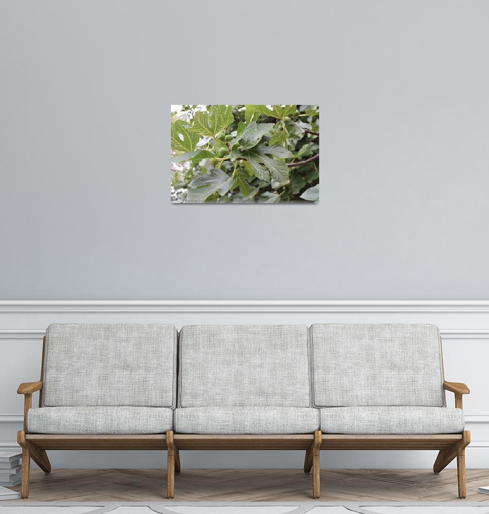 """""""Fresh Figs""""  (2010) by jenniemartin"""