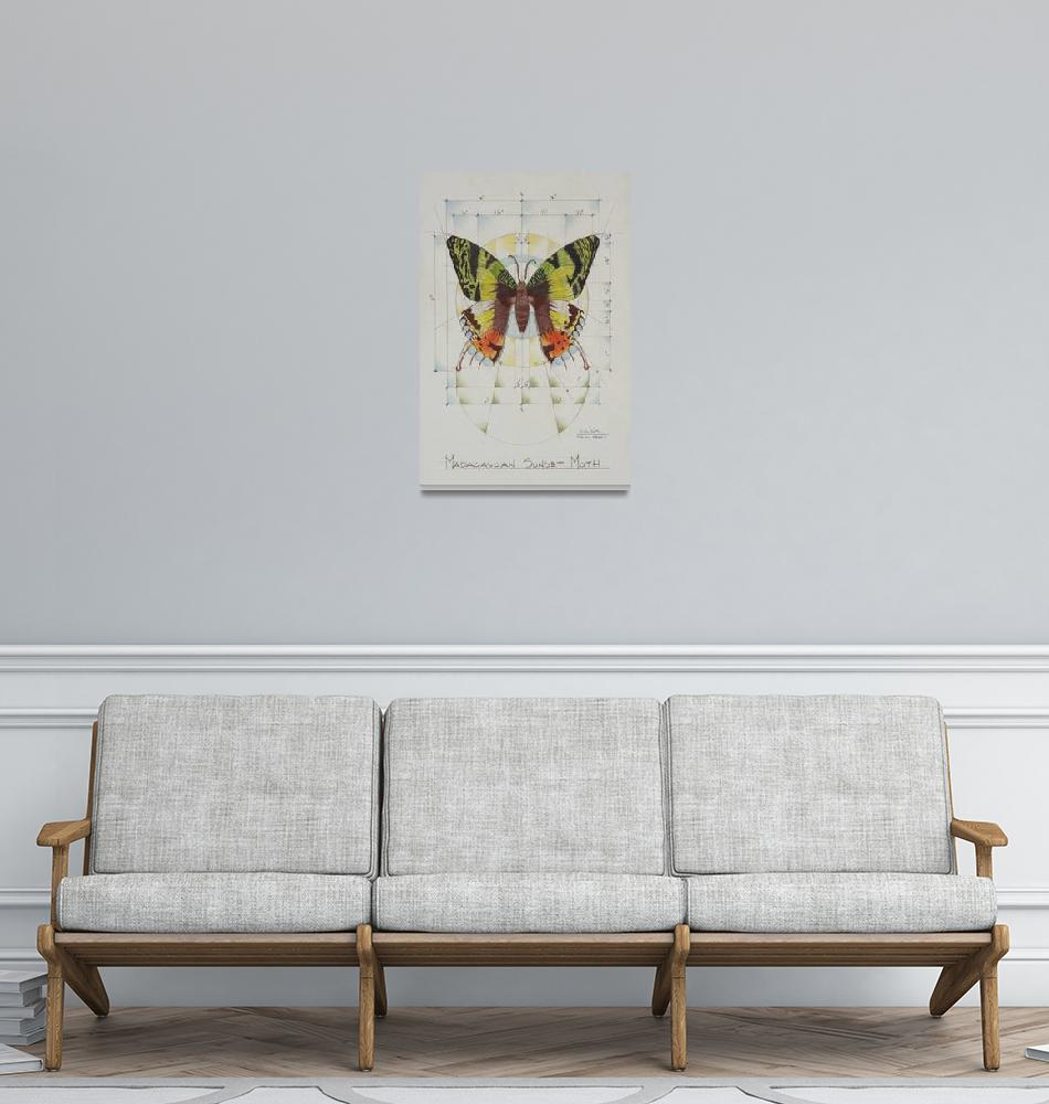 """Madagascan Sunset Moth""  (2008) by dalepatton100"