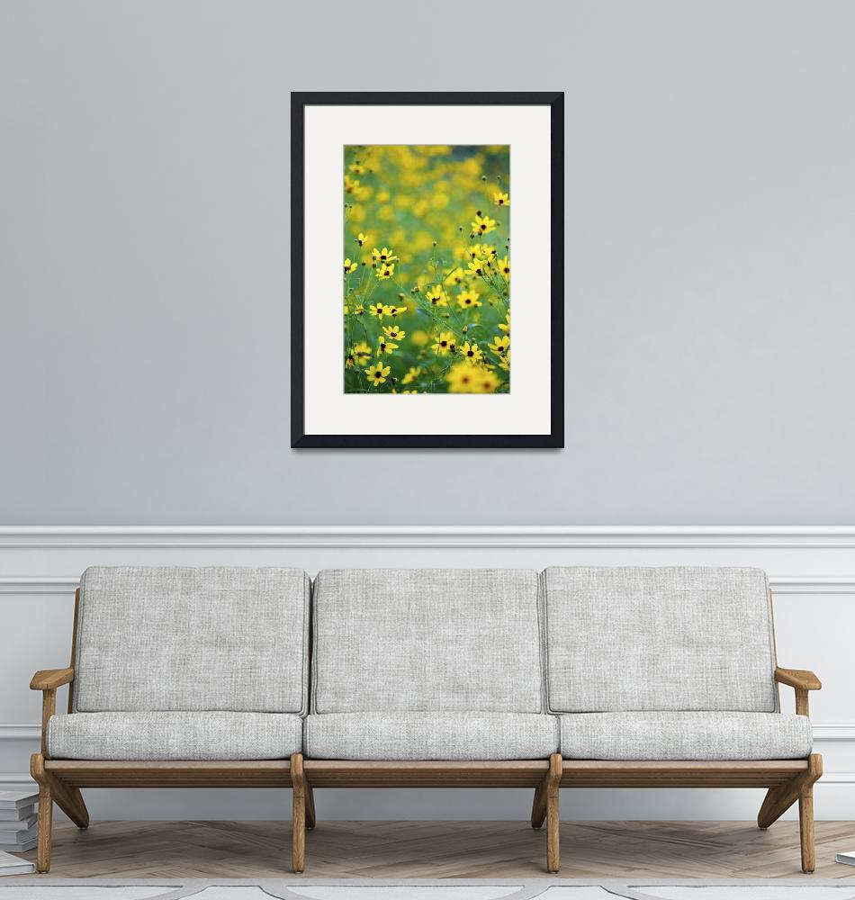 """""""Coreopsis"""" (2010) by jimcrotty"""