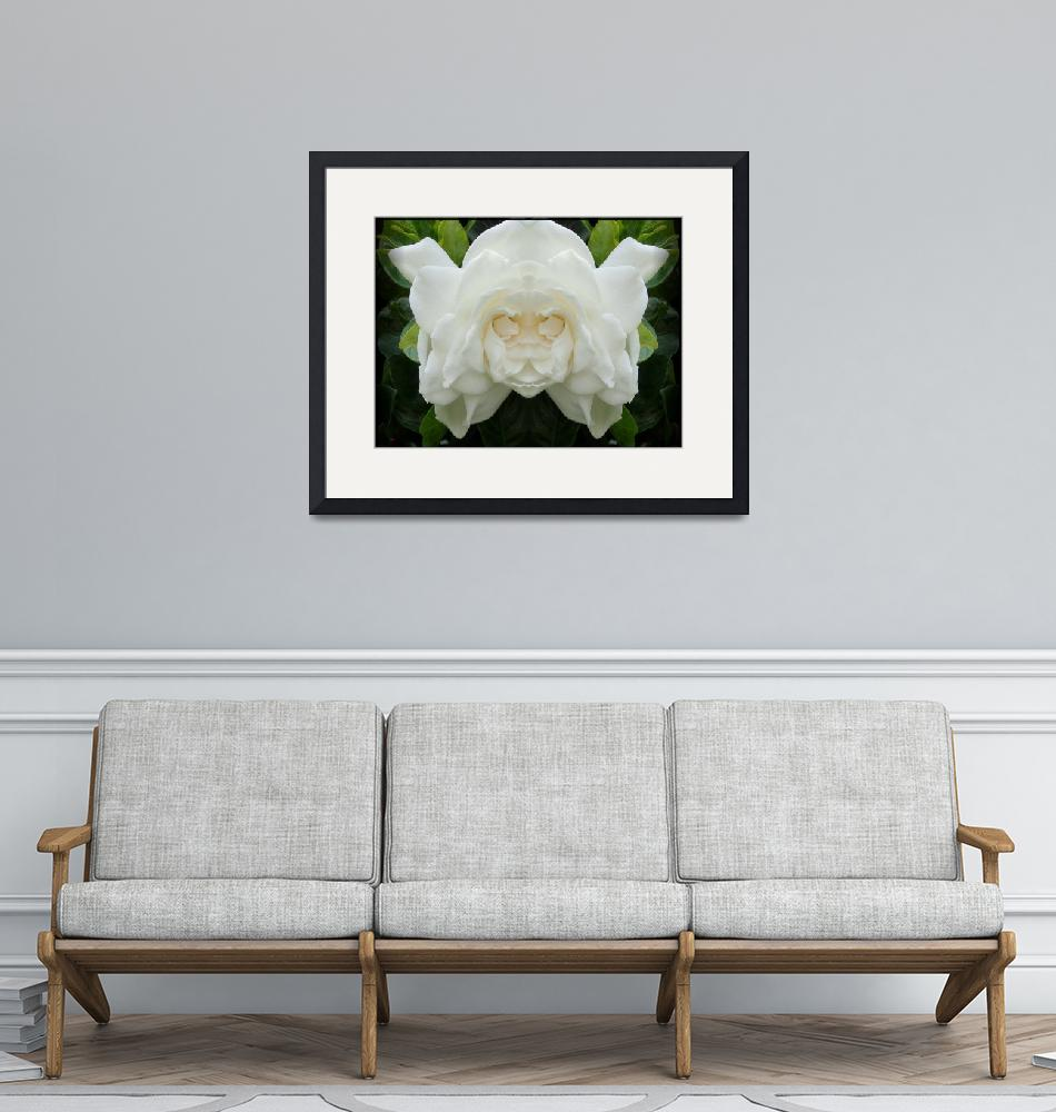 """""""Face of the Gardenia""""  (2008) by doncon402"""
