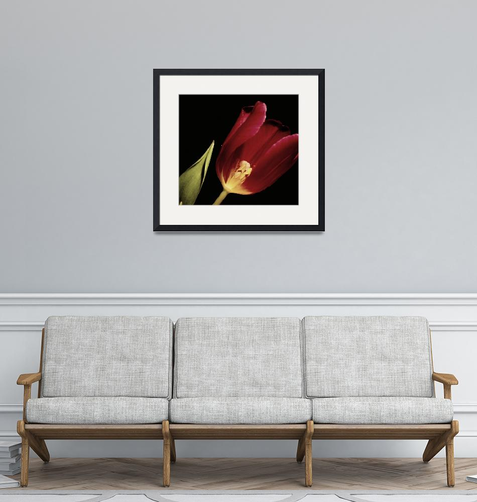 """""""Floral -Closeup 2-WITH 2 POLLEN SLIPPERS""""  by willifindunow"""