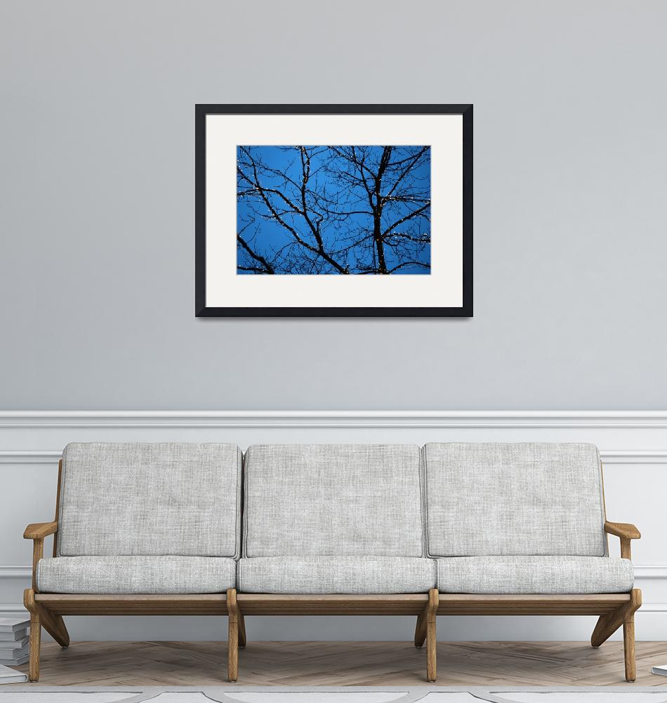 """Tree Silhouette with Blue Sky""  (2005) by BobFikePhoto"