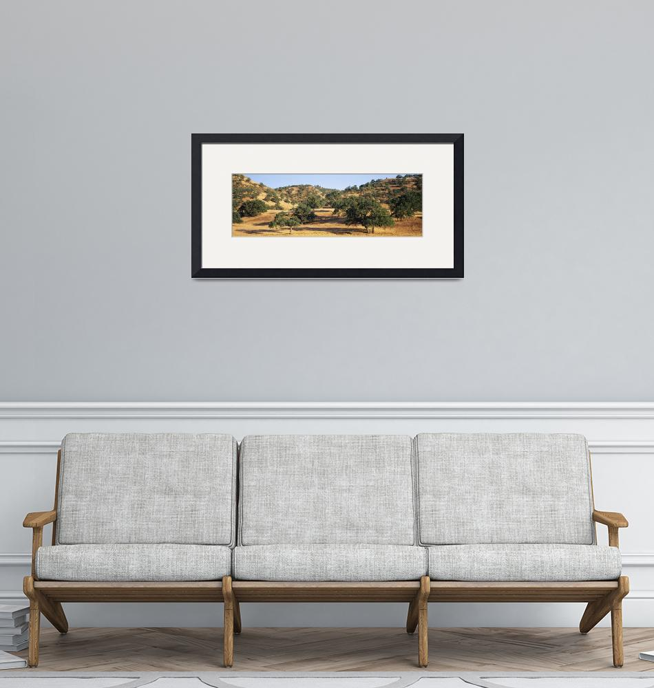 """""""Oak trees on hill"""" by Panoramic_Images"""