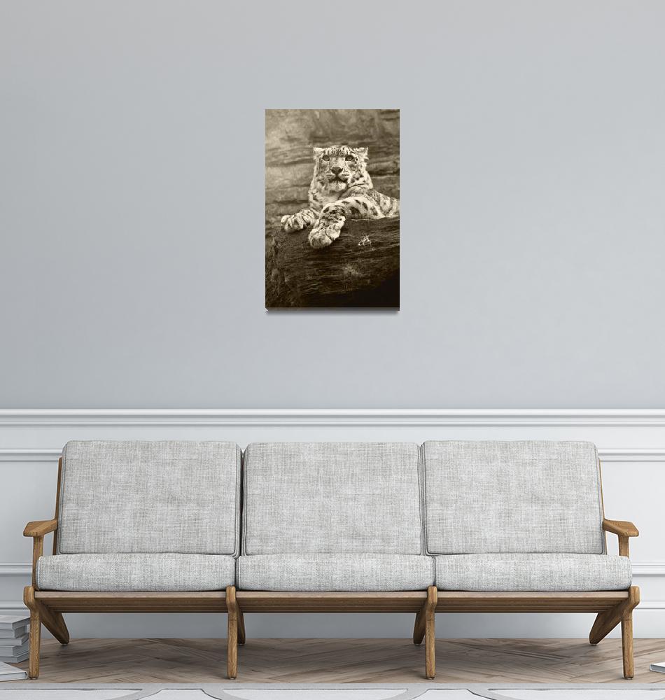 """Snow Leopard""  (2007) by andrewaj"