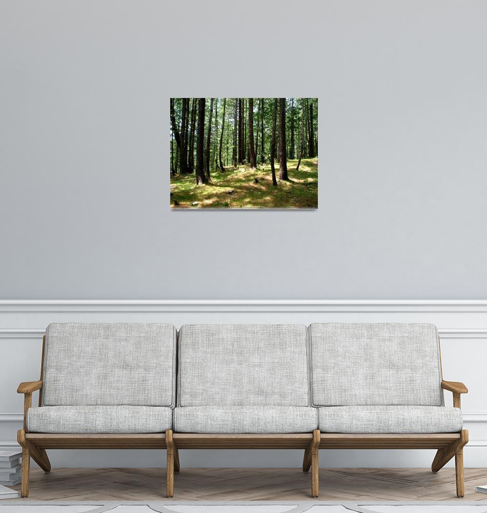 """Cool Pine Forests nathiagali IMG_900706""  (2006) by davies"