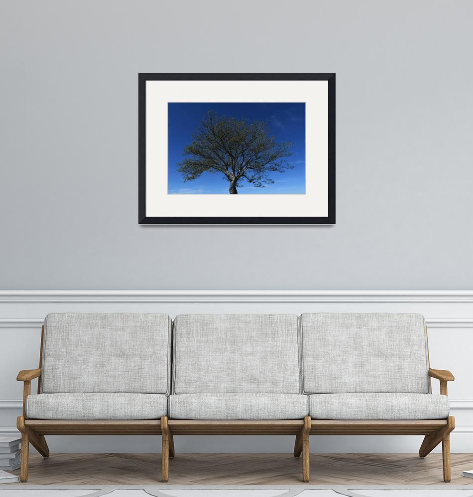 """""""Tree_1082"""" (2019) by tvn"""