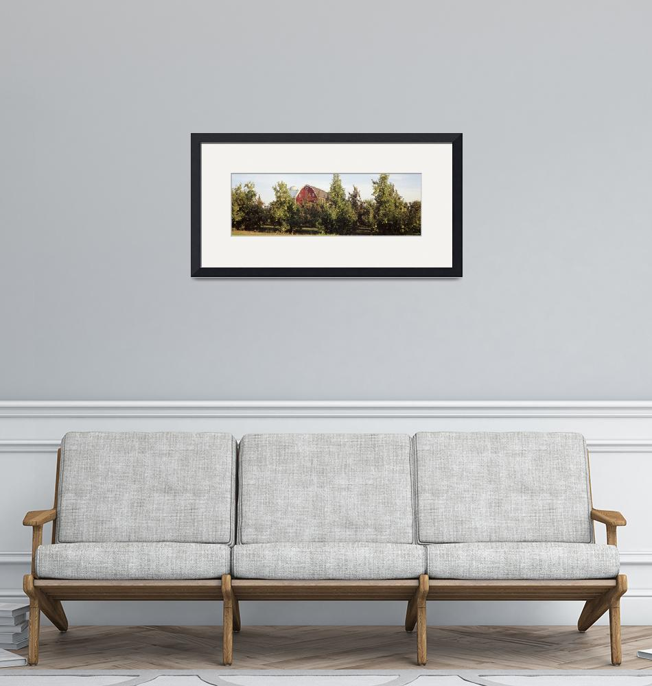 """""""Apple trees in an orchard""""  by Panoramic_Images"""