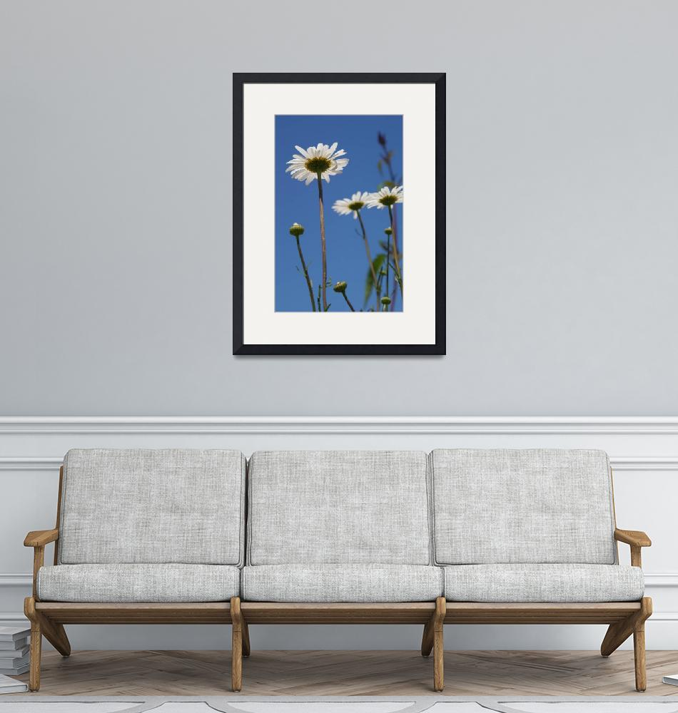 """""""Upsy Daisies"""" (2010) by Dullinger"""