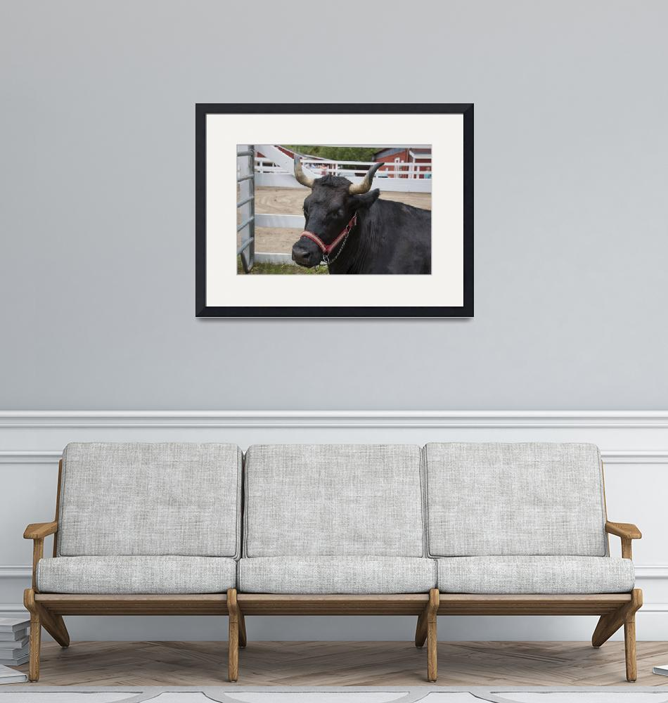 """""""Oxen""""  (2017) by angelophotos"""