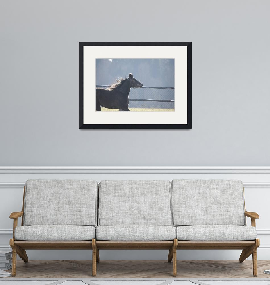 """""""horse""""  by IanMiddletonphotography"""
