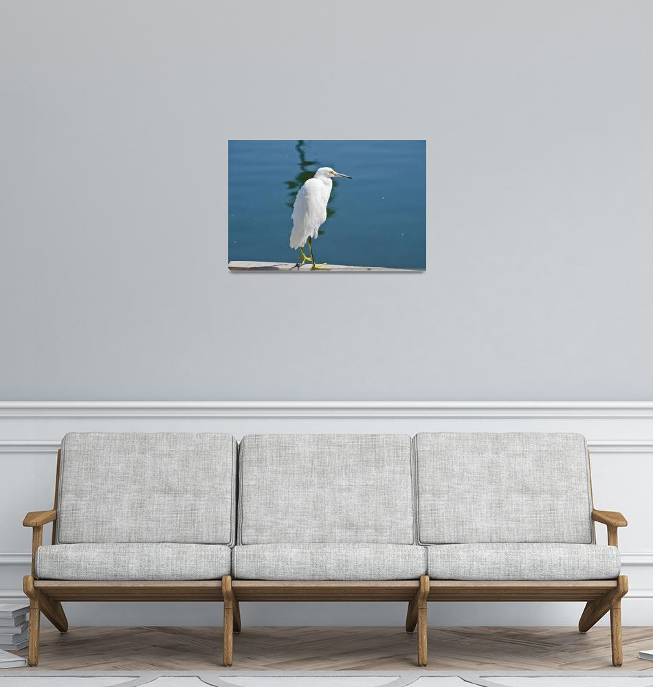 """""""Great Egret""""  (2014) by robnelmsphotography"""