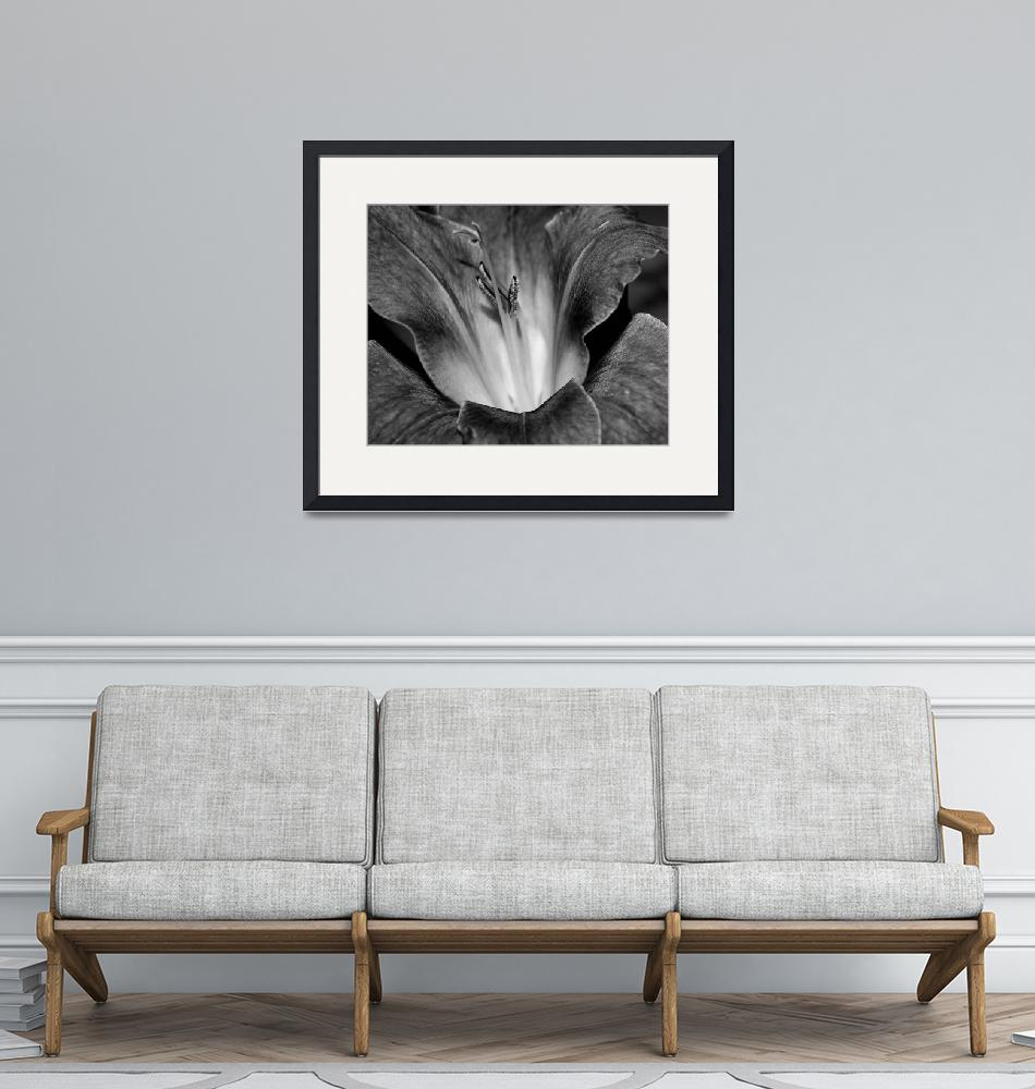 """""""Gladiola In Black And White""""  (2015) by bettynorthcutt"""