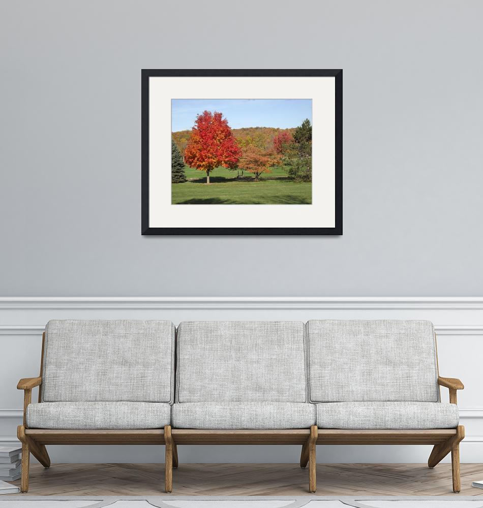 """""""Maple in Autumn 2012""""  (2012) by PicturesByJames"""