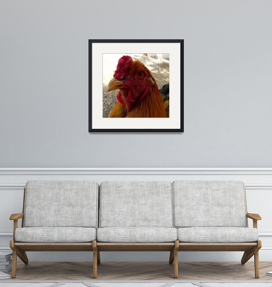"""""""Golden Rooster""""  (2009) by nemosphotography"""