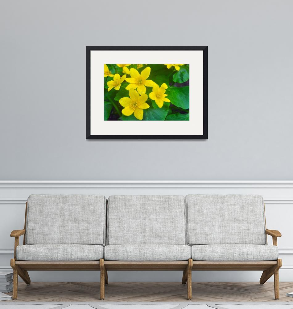 """Marsh Marigolds""  (2011) by LJdesigns"