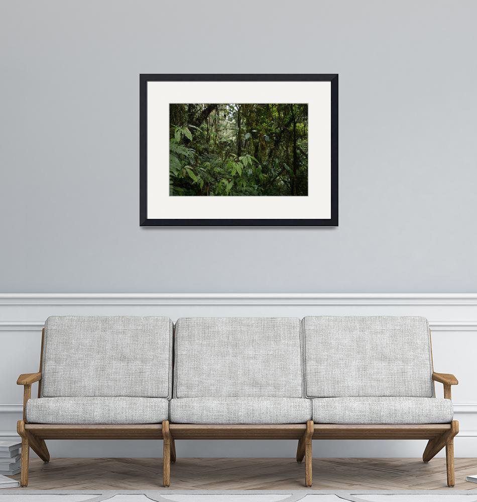 """Forest View""  (2019) by mariemedeirosphotography"