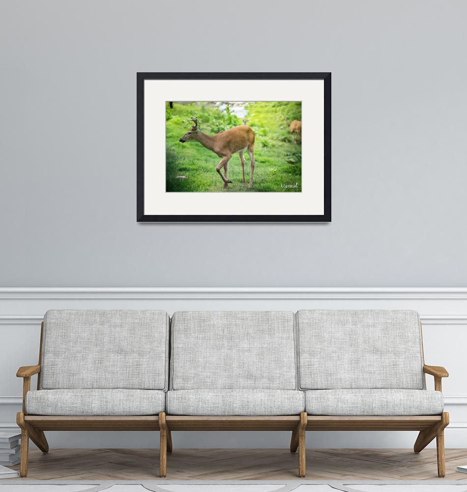 """""""Whitetail Deer-Wander (2)""""  by JZaringPhoto"""