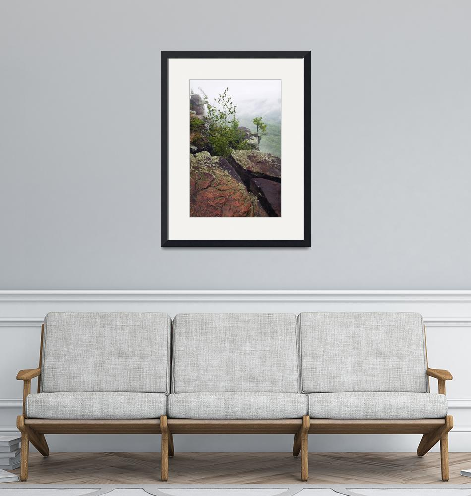 """""""Trees growing through quartzite rock boulders on""""  by Panoramic_Images"""