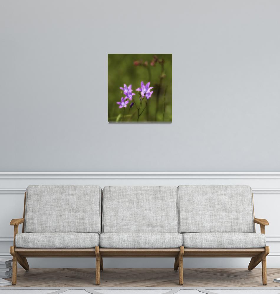 """Flowers of June""  (2009) by Krayn"