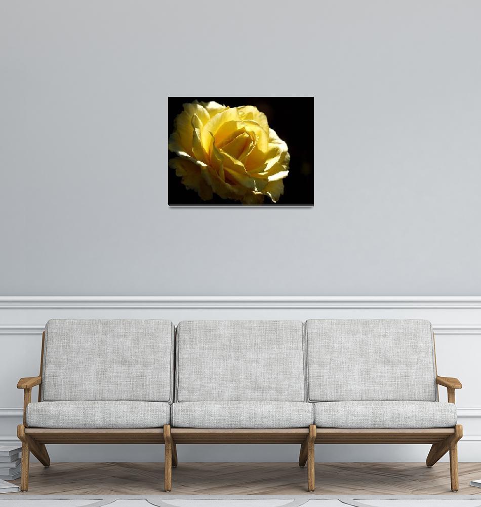 """Yellow Rose""  (2010) by raetucker"