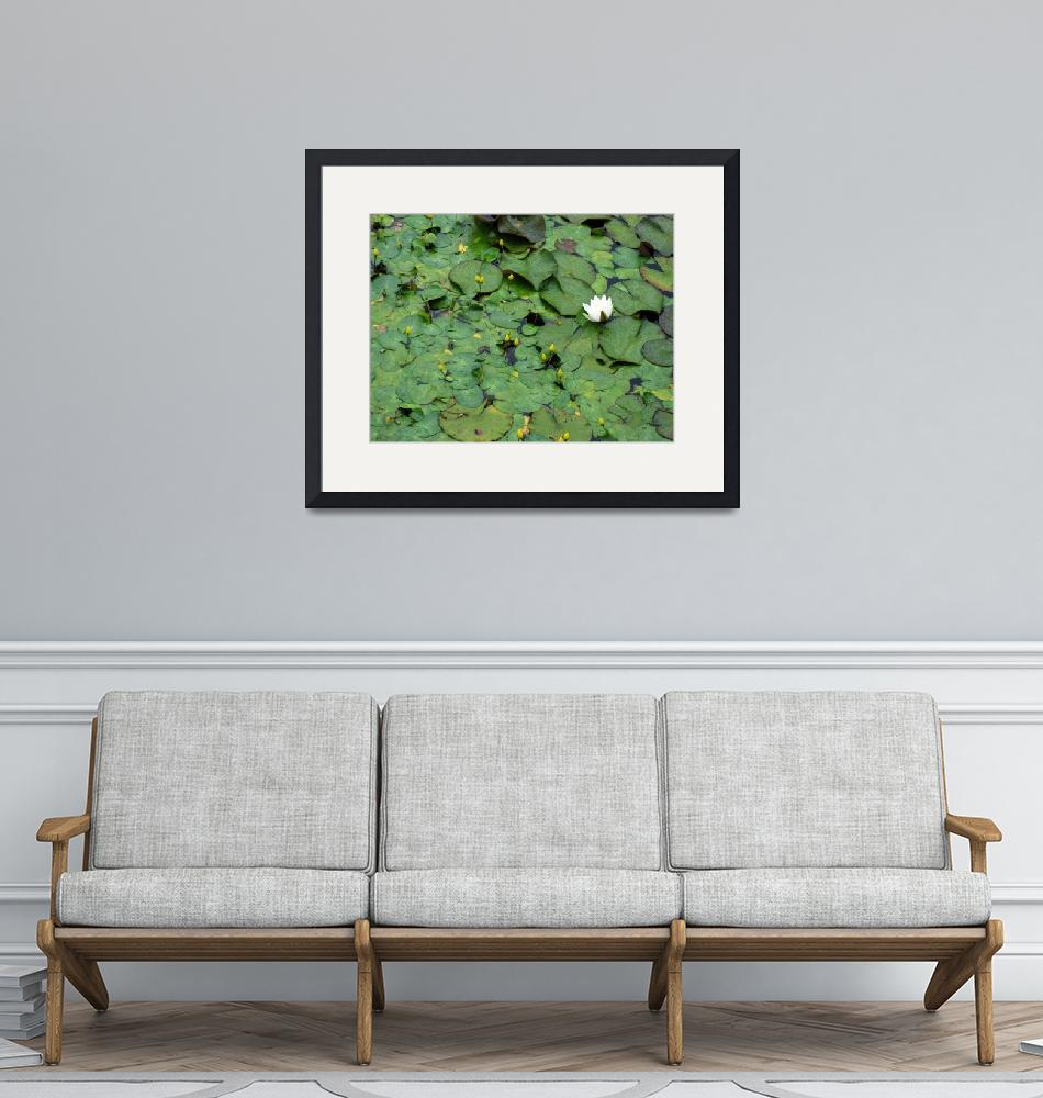 """""""New Brunswick Canada: Lily Pads""""  (2006) by Evilkid"""