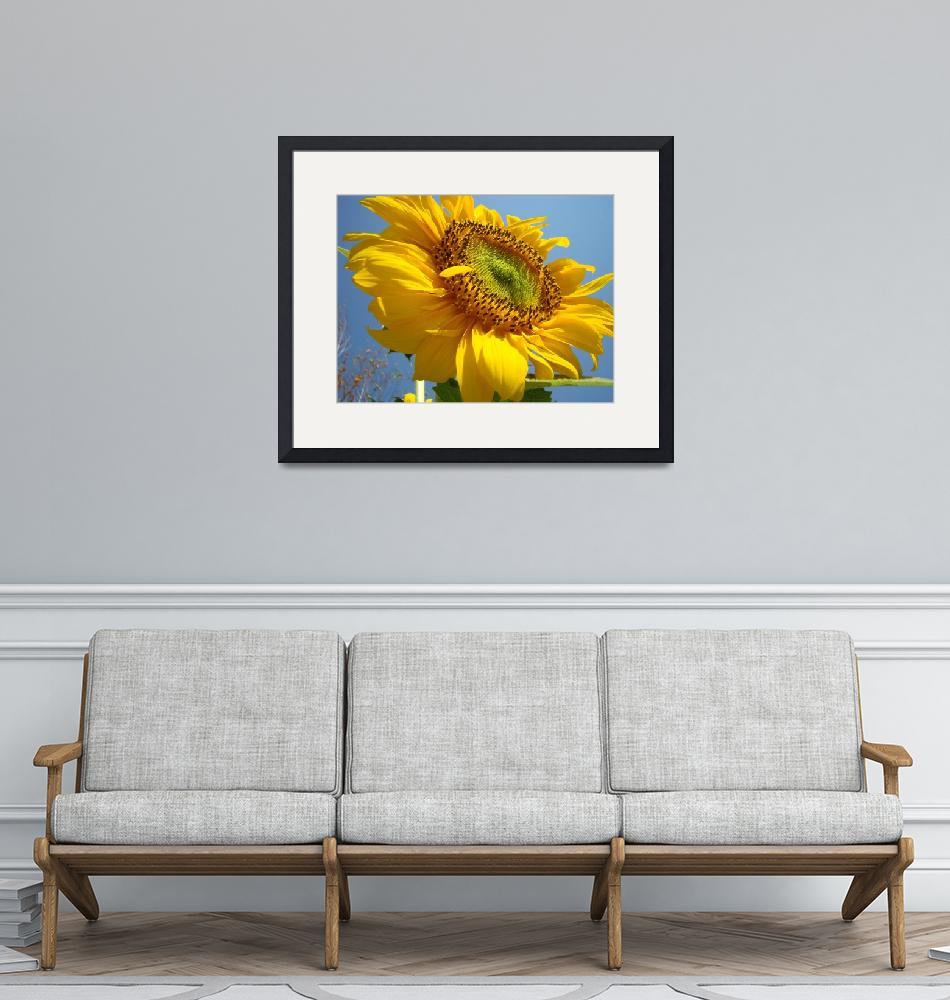 """SUNFLOWER Sunny Blue Sky Art Giclee Baslee Trout""  (2009) by BasleeTroutman"