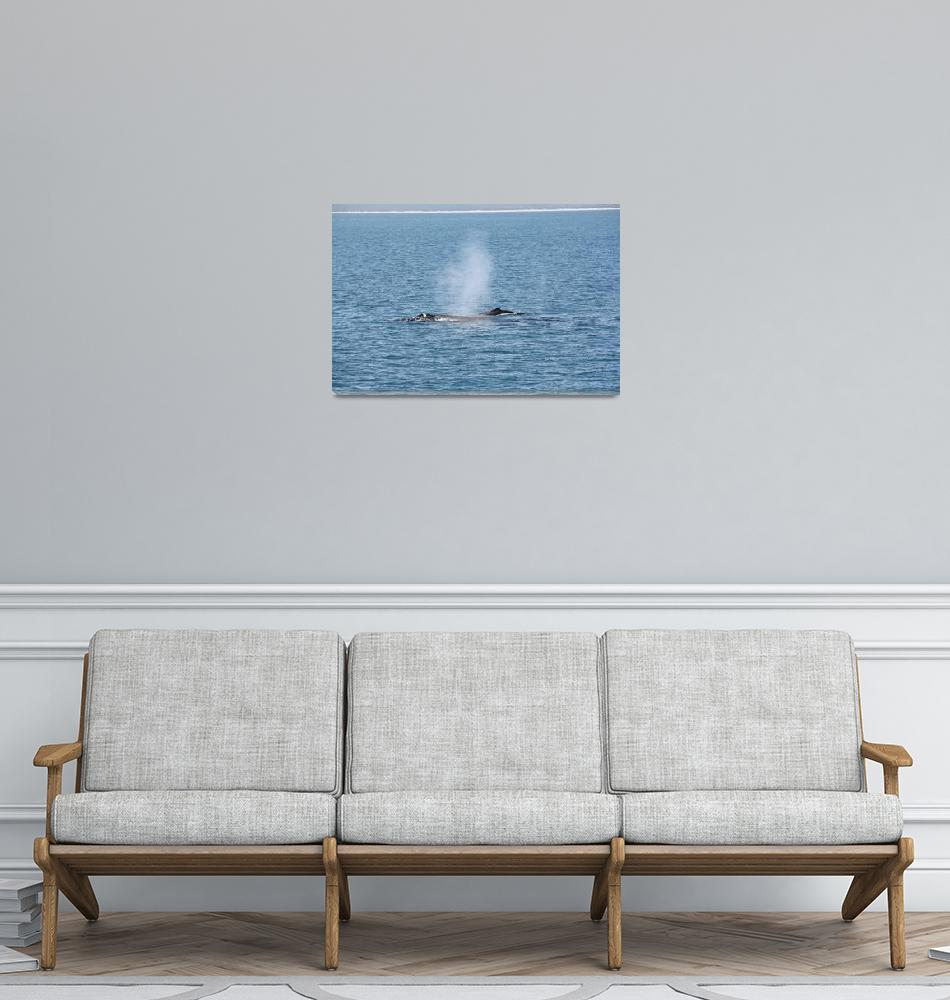 """""""NaP_ Whale Watching007""""  by nevilleprosser"""