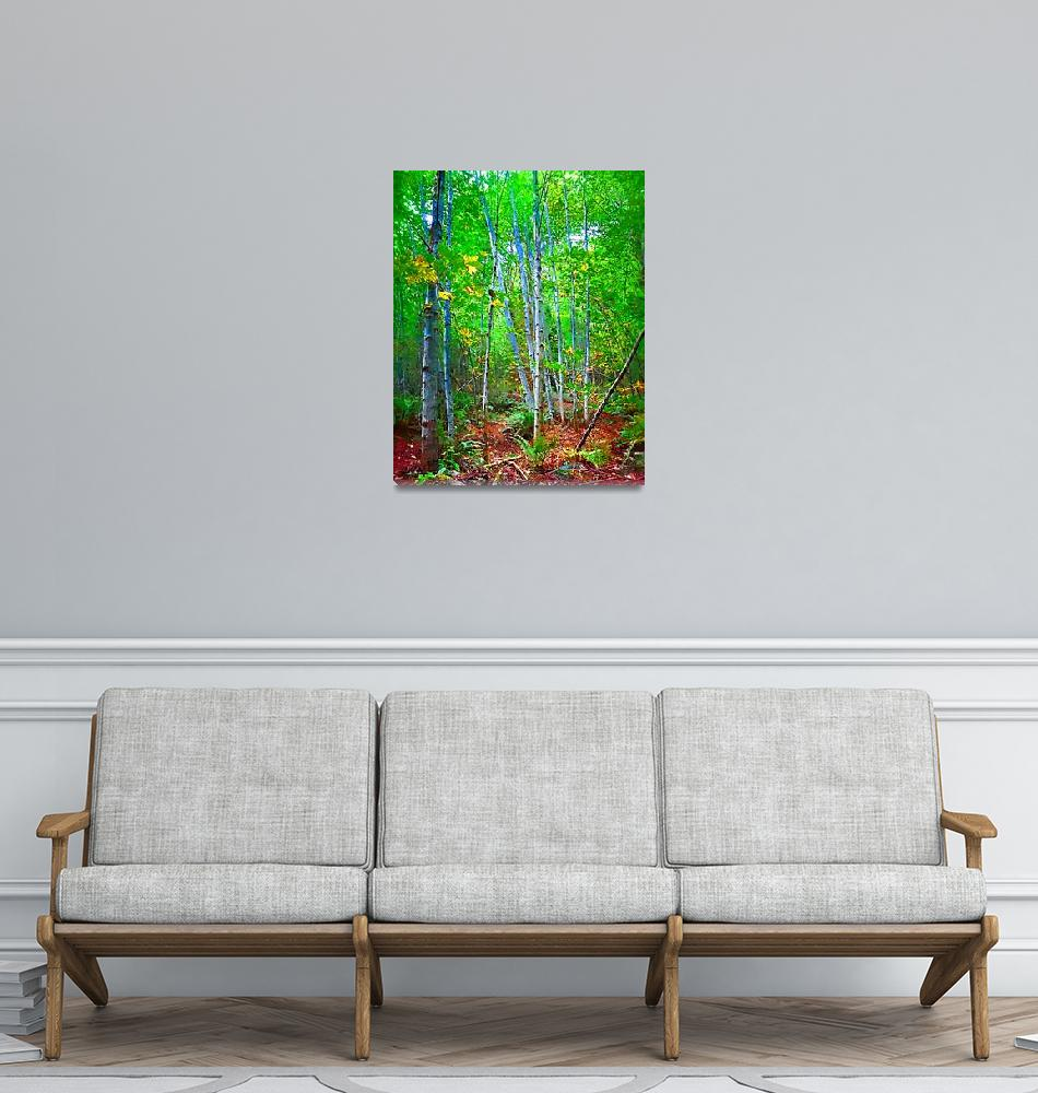 """""""Birch Trees in the Woods""""  (2014) by Kirtdtisdale"""