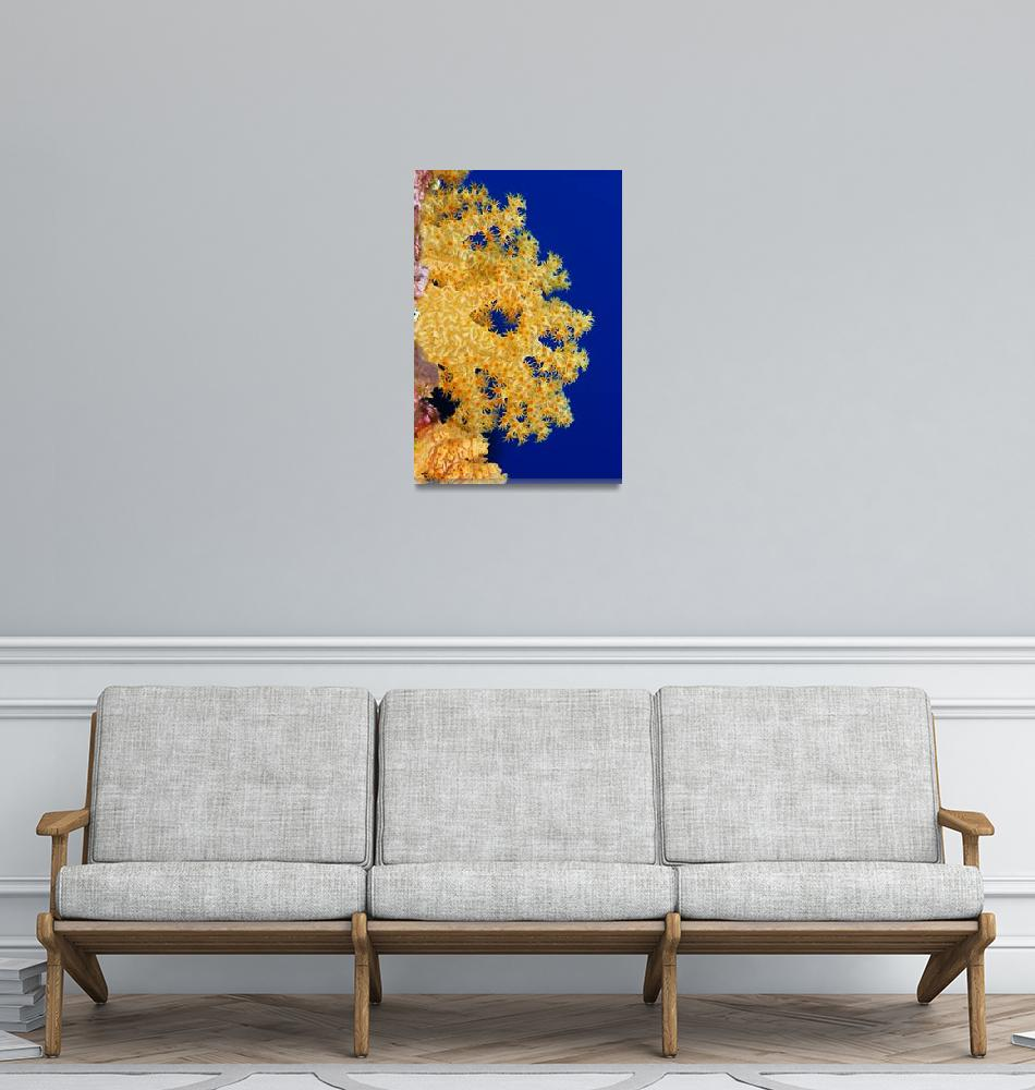 """Micronesia, Yap, Soft Alcyonarian Coral""  by DesignPics"