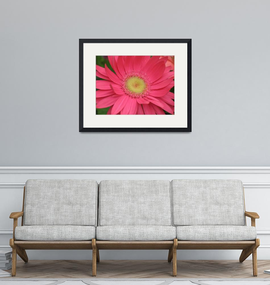 """Crazy Over Daisy (Pink Gerbera)""  (2004) by CRS"