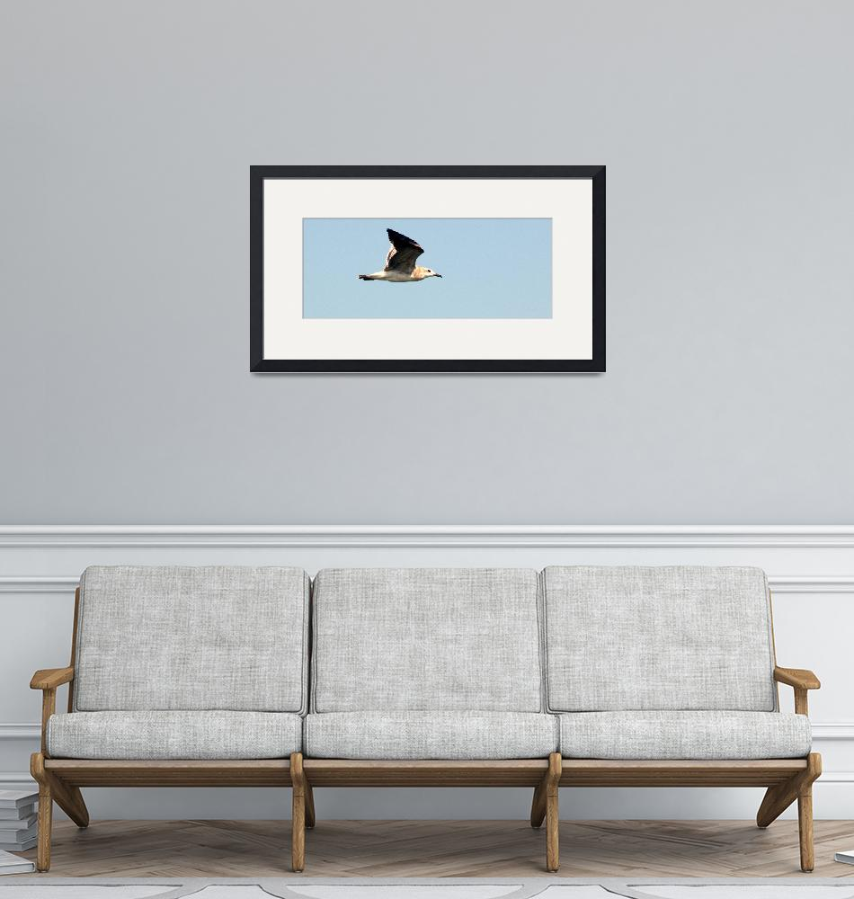 """""""Seagull""""  (2010) by GinetteCallaway"""