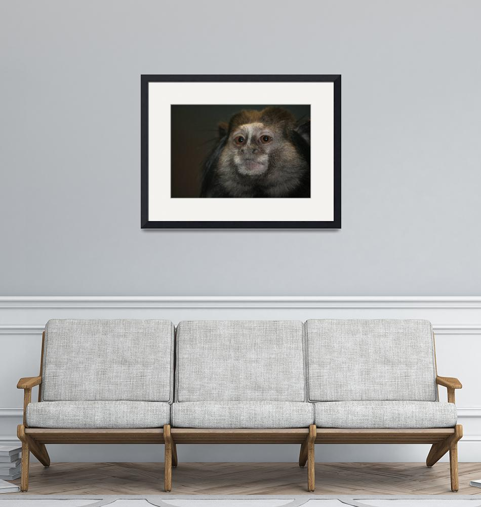 """""""Wise Monkey""""  (2008) by chashathaway"""