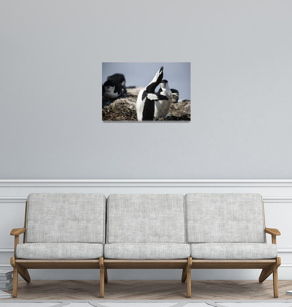 """""""Antarctica-Chinstrap-Penguin-11902""""  (2012) by FindleyPhoto"""