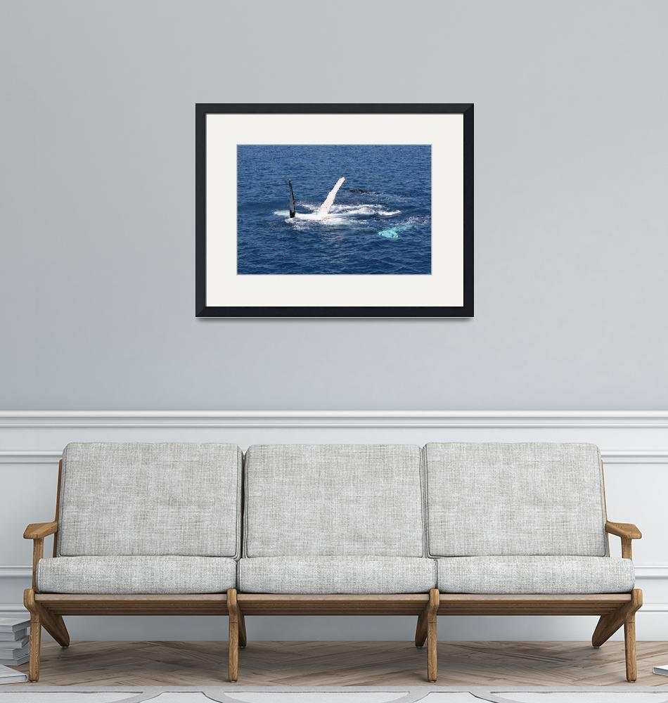 """""""NaP_ Whale Watching145""""  by nevilleprosser"""