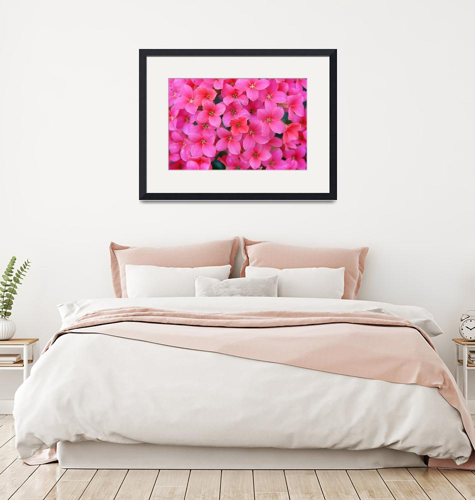 """""""Divine Pink Flower Stretched Canvas Prints""""  (2013) by onenesspixels"""
