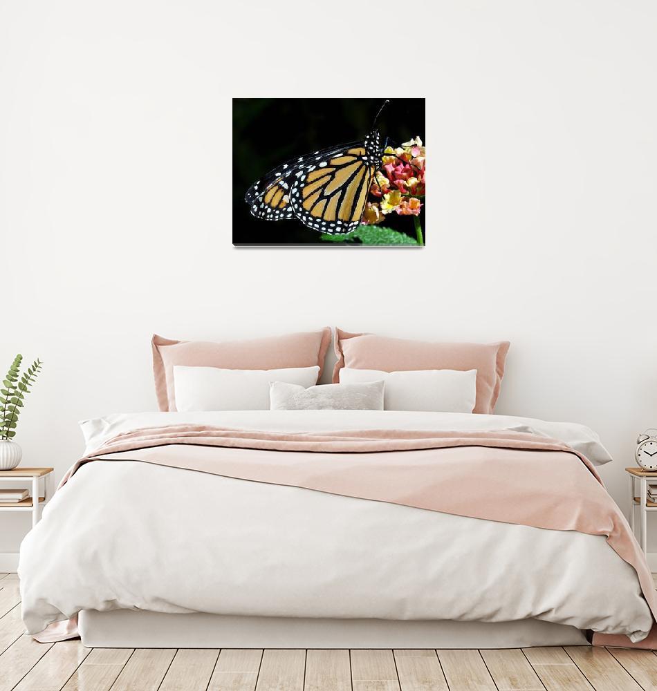 """""""Monarch Butterfly & Lantana""""  (2010) by evansonart"""