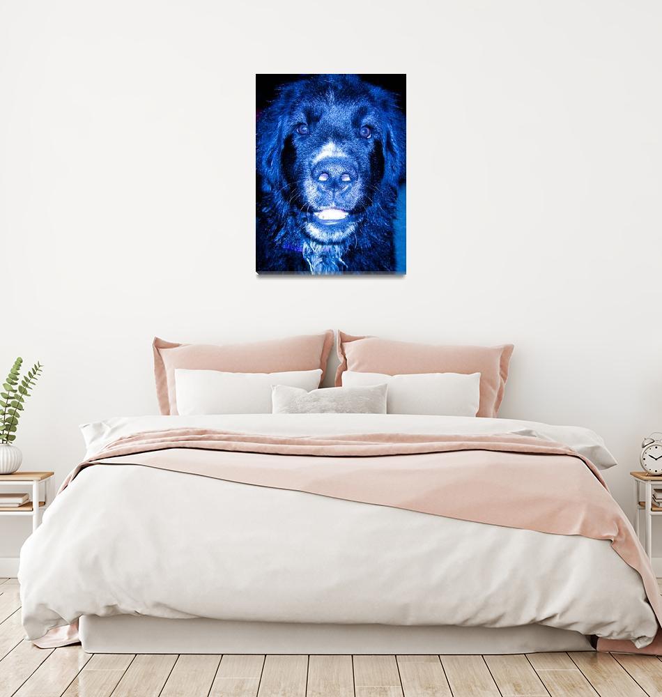 """Dog Gone Blue""  (2007) by phdgirl2010"