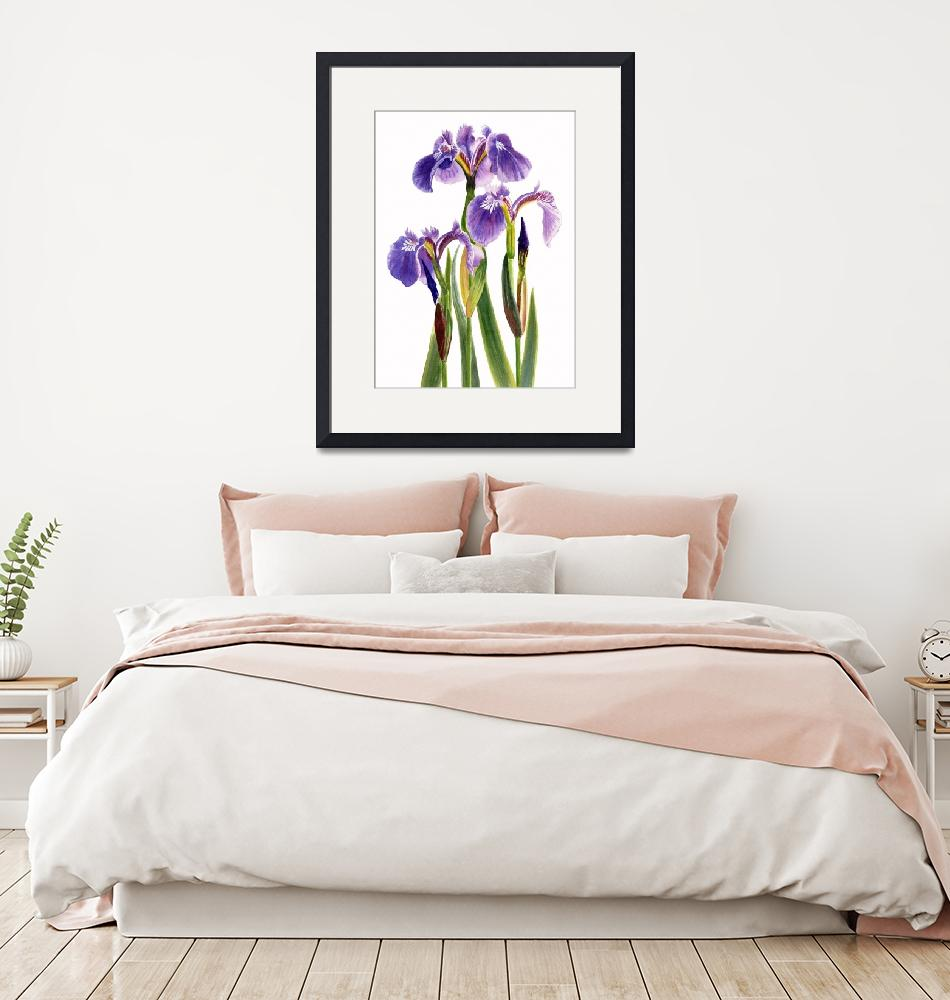 """Three Wild Irises on White""  (2009) by Pacific-NW-Watercolors"
