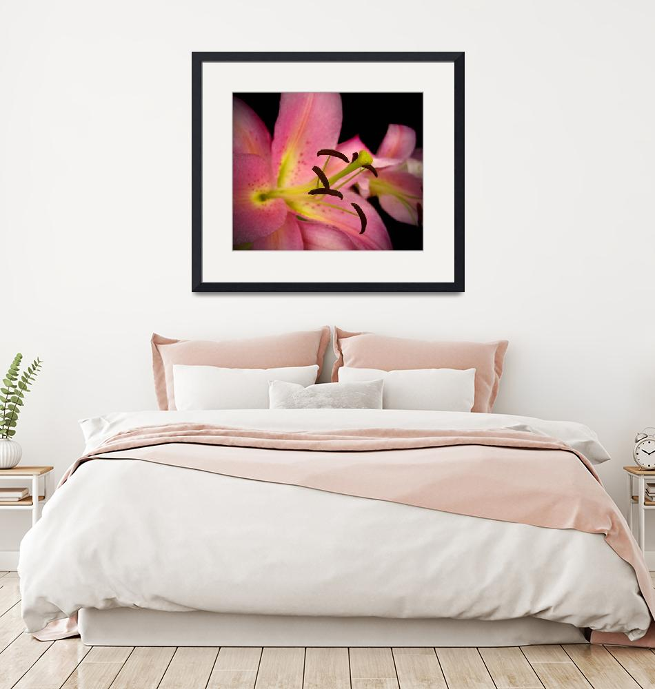 """""""Pink Perfection Lily""""  (2011) by rewards4life"""