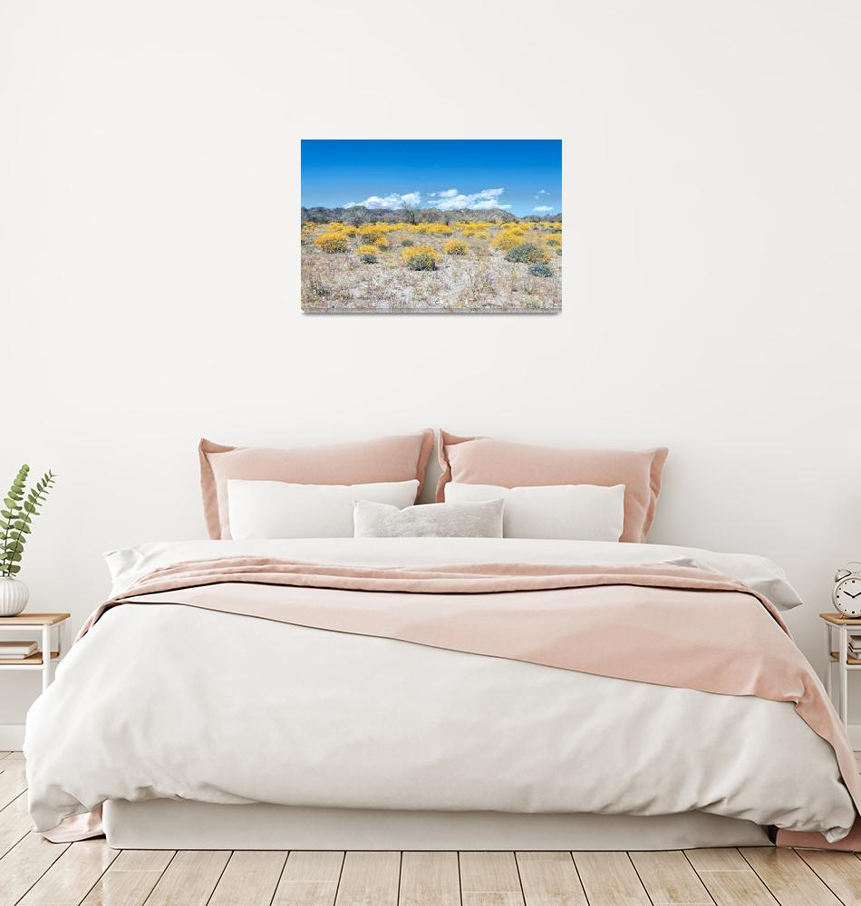 """Super Bloom Paradise Joshua Tree California 7292""  by amynnasser"