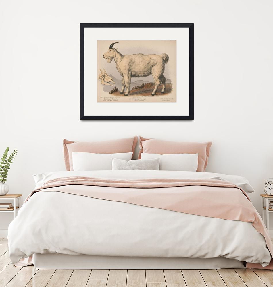 """""""Vintage Illustration of a Goat (1874)"""" by Alleycatshirts"""