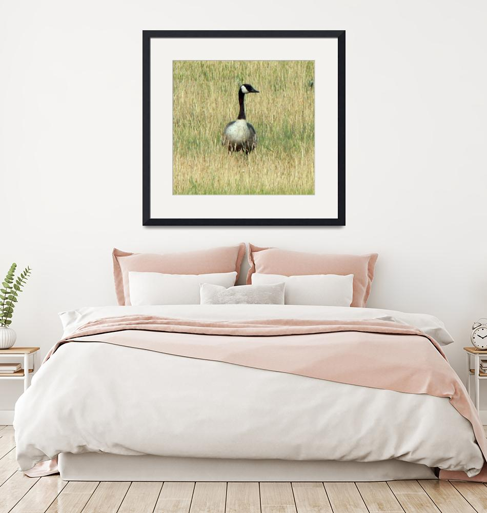 """Goose in the Grass""  (2007) by rayjacque"