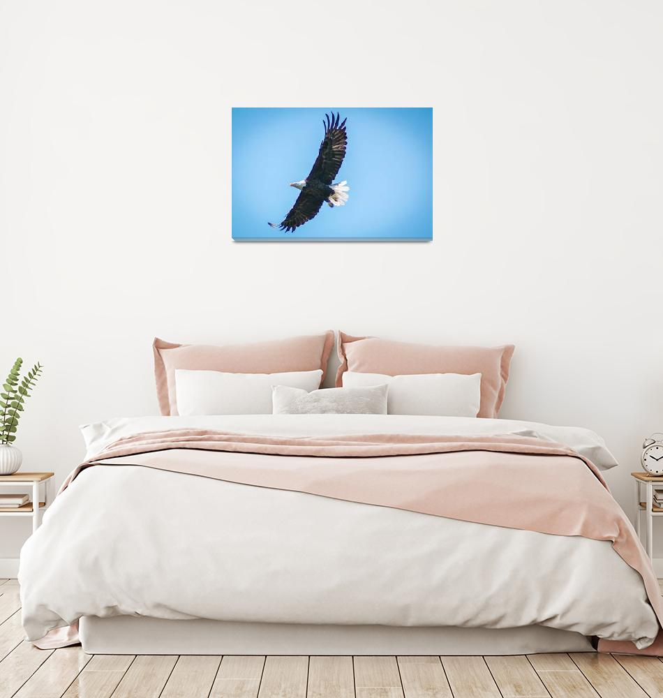 """""""Eagle in flight""""  (2015) by ctgilbertPhoto"""
