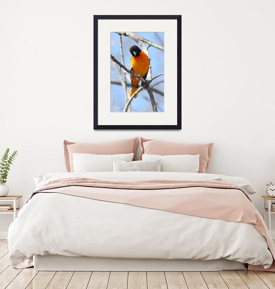 """Baltimore Orioles""  by cameragal"