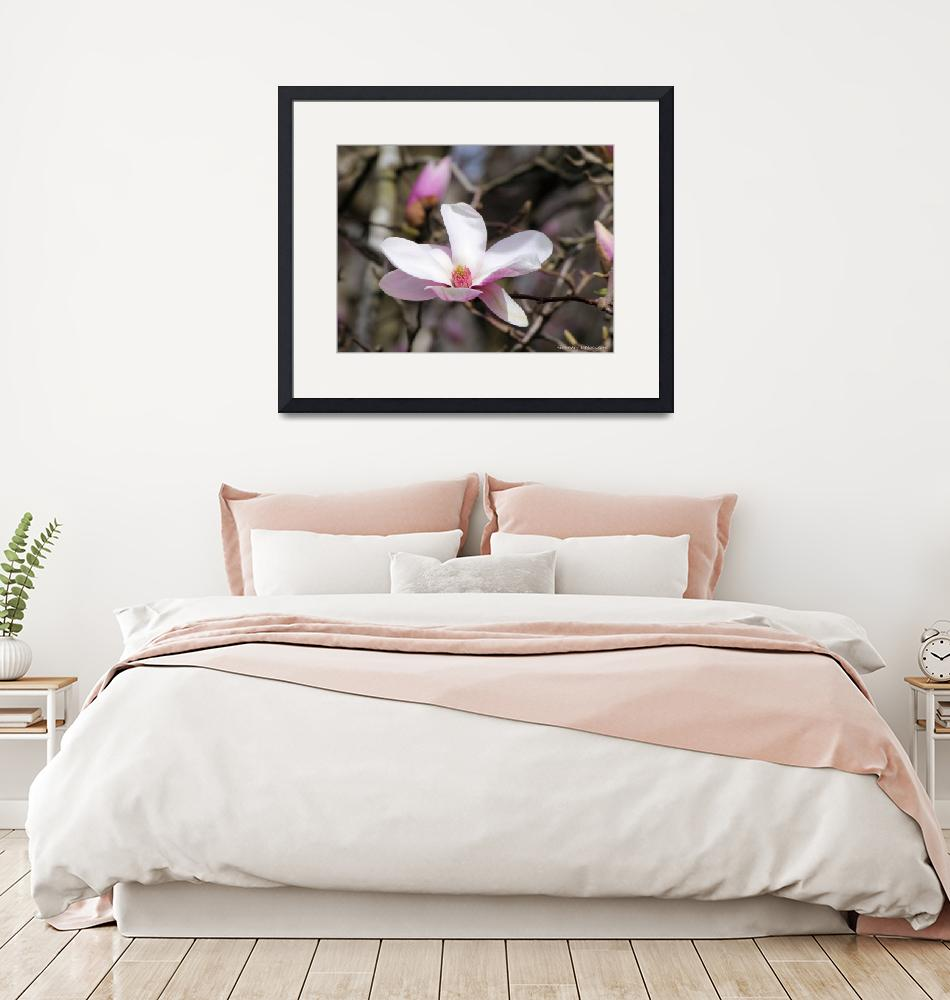 """""""Open Magnolia""""  (2020) by Kimmary"""