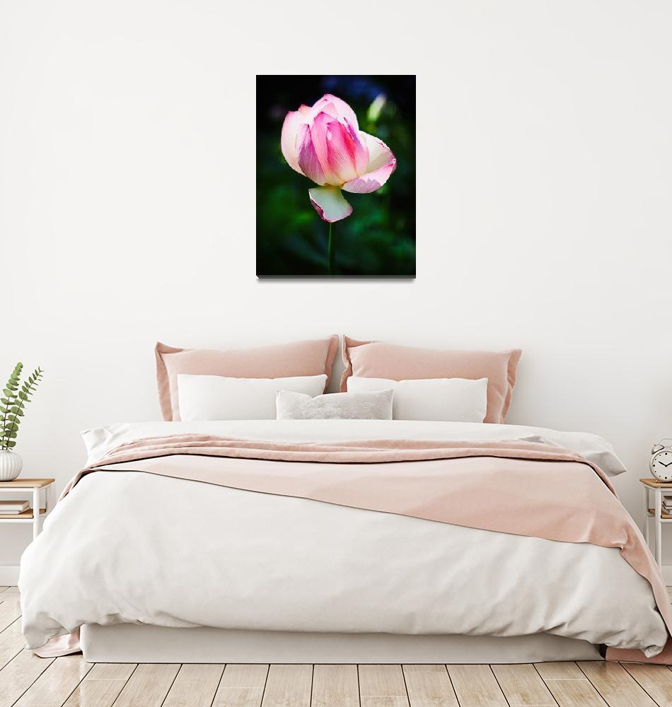 """Lotus Bloom No1""  (2010) by johncorney"